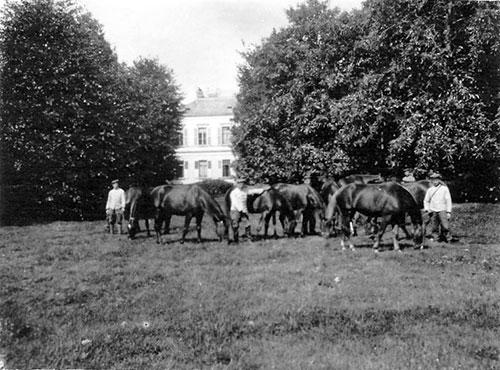 Les chevaux allemands broutent les prairies des Belles demeures
