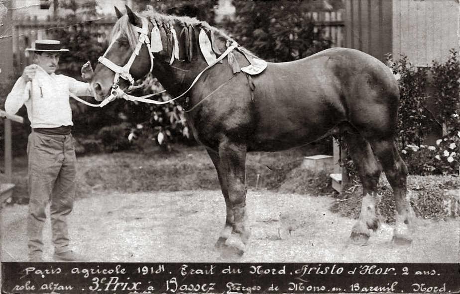 Étalon - Harnais de cheval